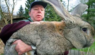 Интенсивное выращивание кроликов на мясо - Мои статьи - Каталог статей